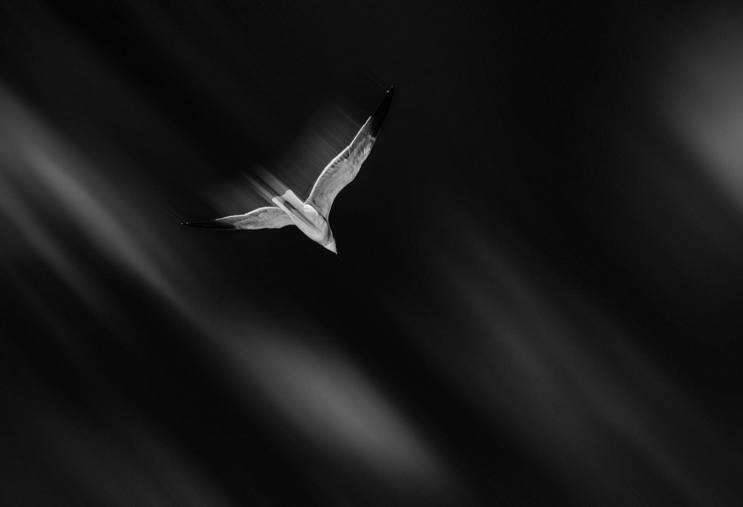 Untitled 3 by rami yazgi
