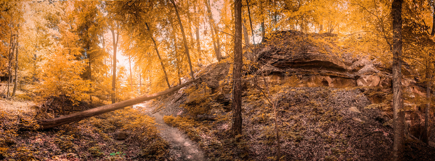 fall by rami yazgi