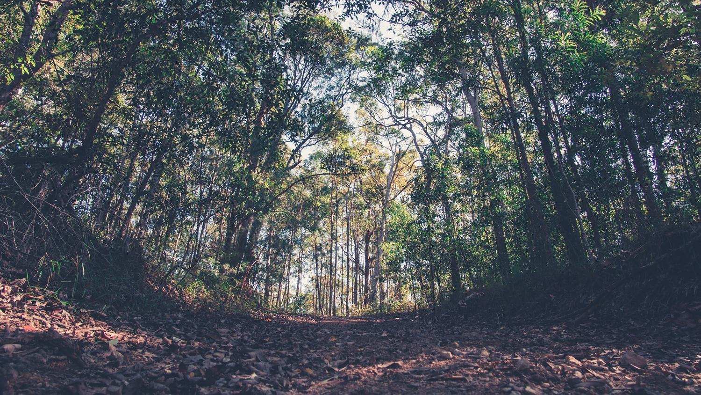 Forest path by Srki De-La Vega