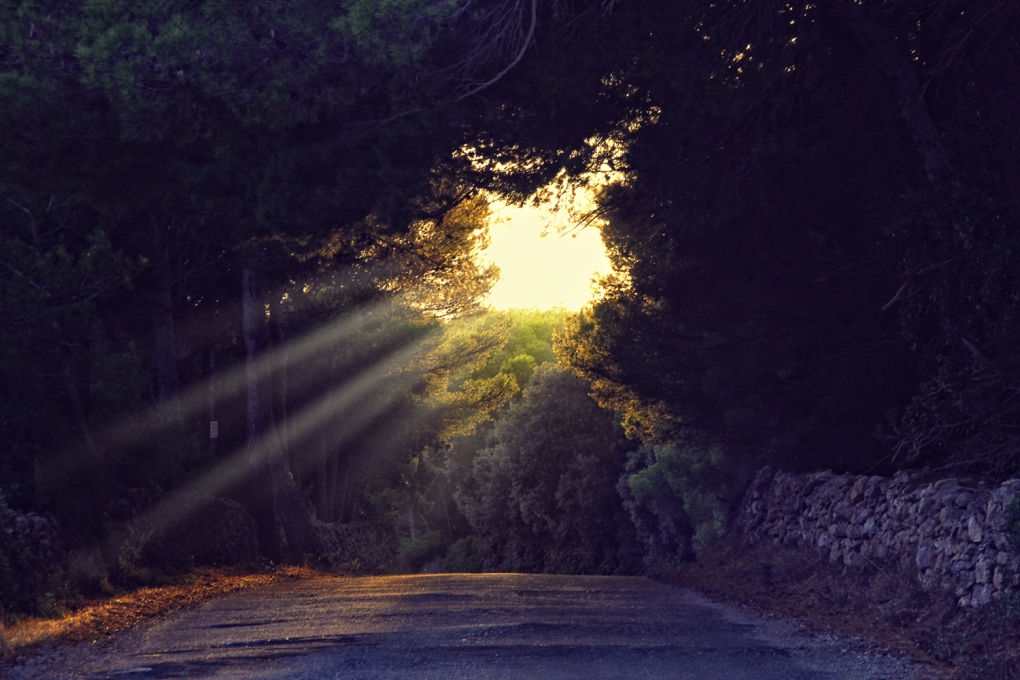 Sunlight by Klefer Vinz