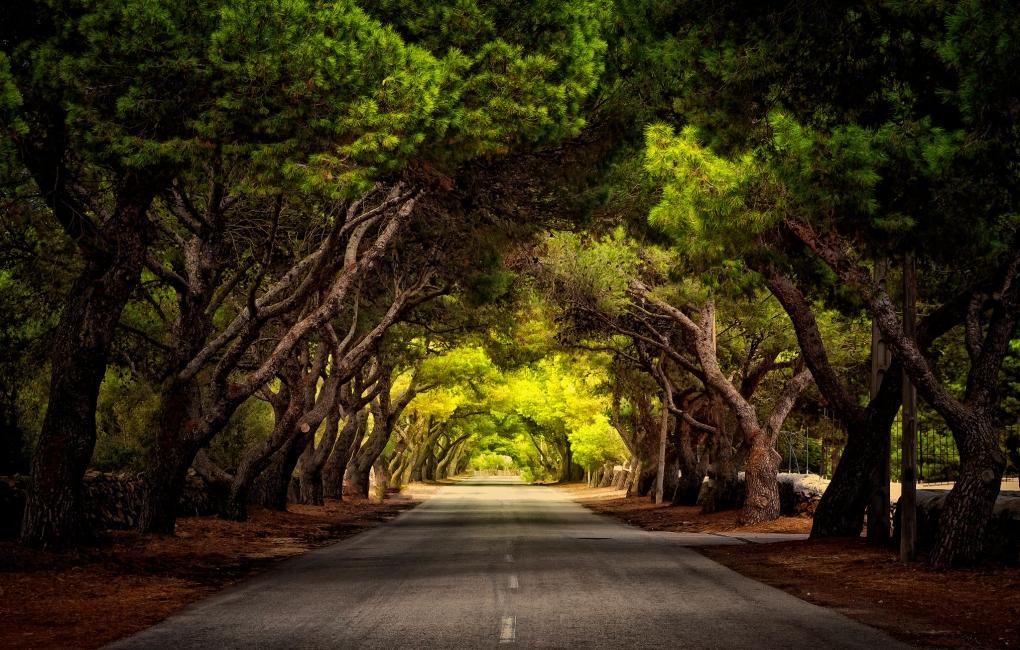 Road of trees by Klefer Vinz