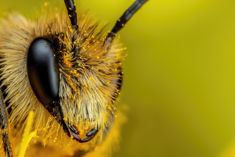 Solitary Bee III by John Kimbler