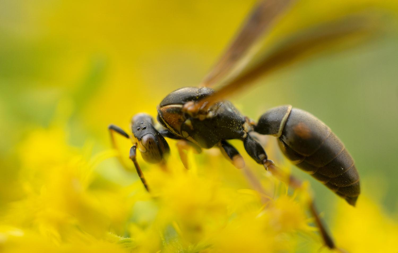 Bee by Van Vo