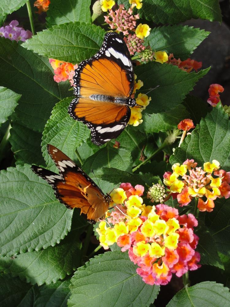 Butterflies1 by Eric Kremer