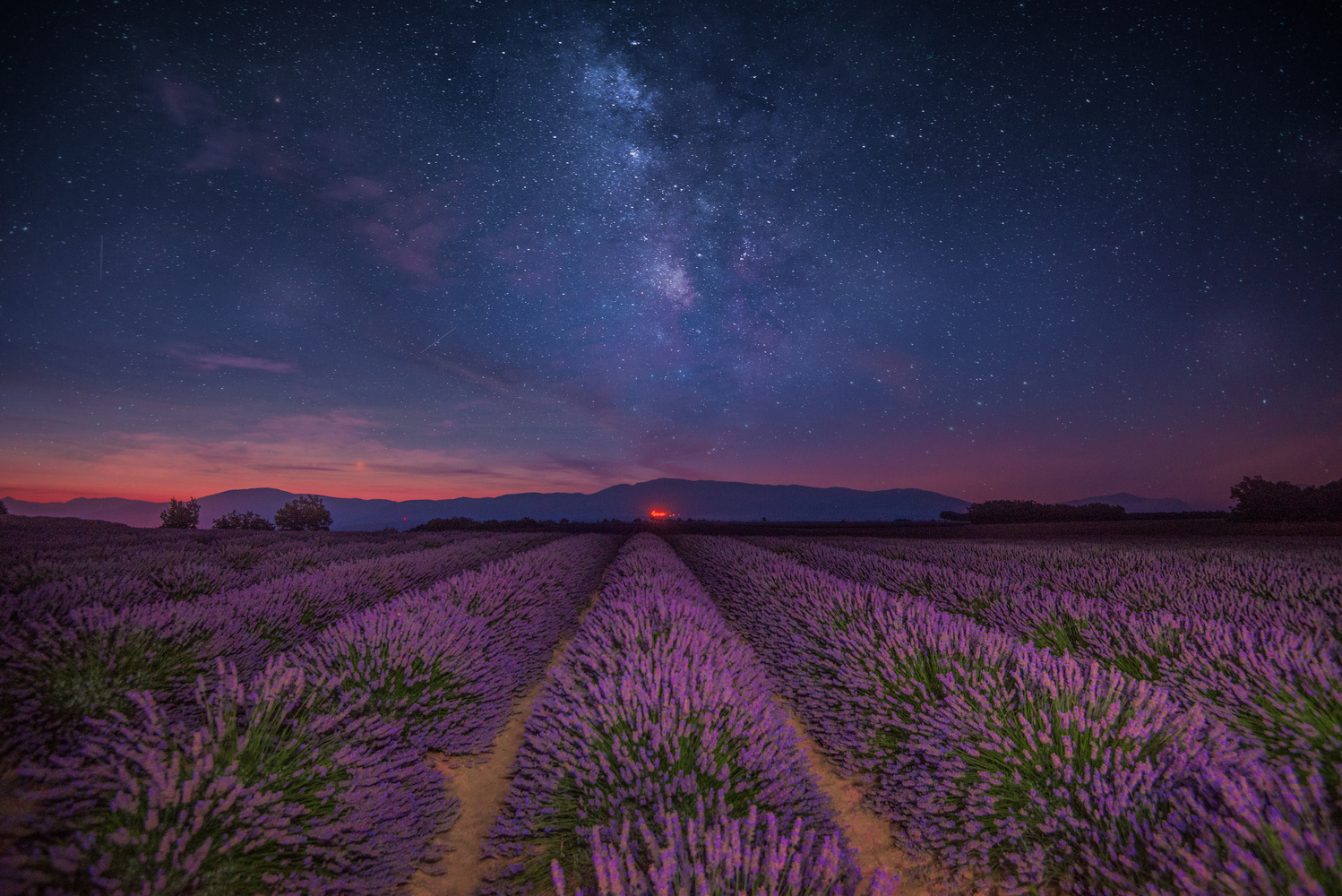 Valensole Stars by Alex Hill