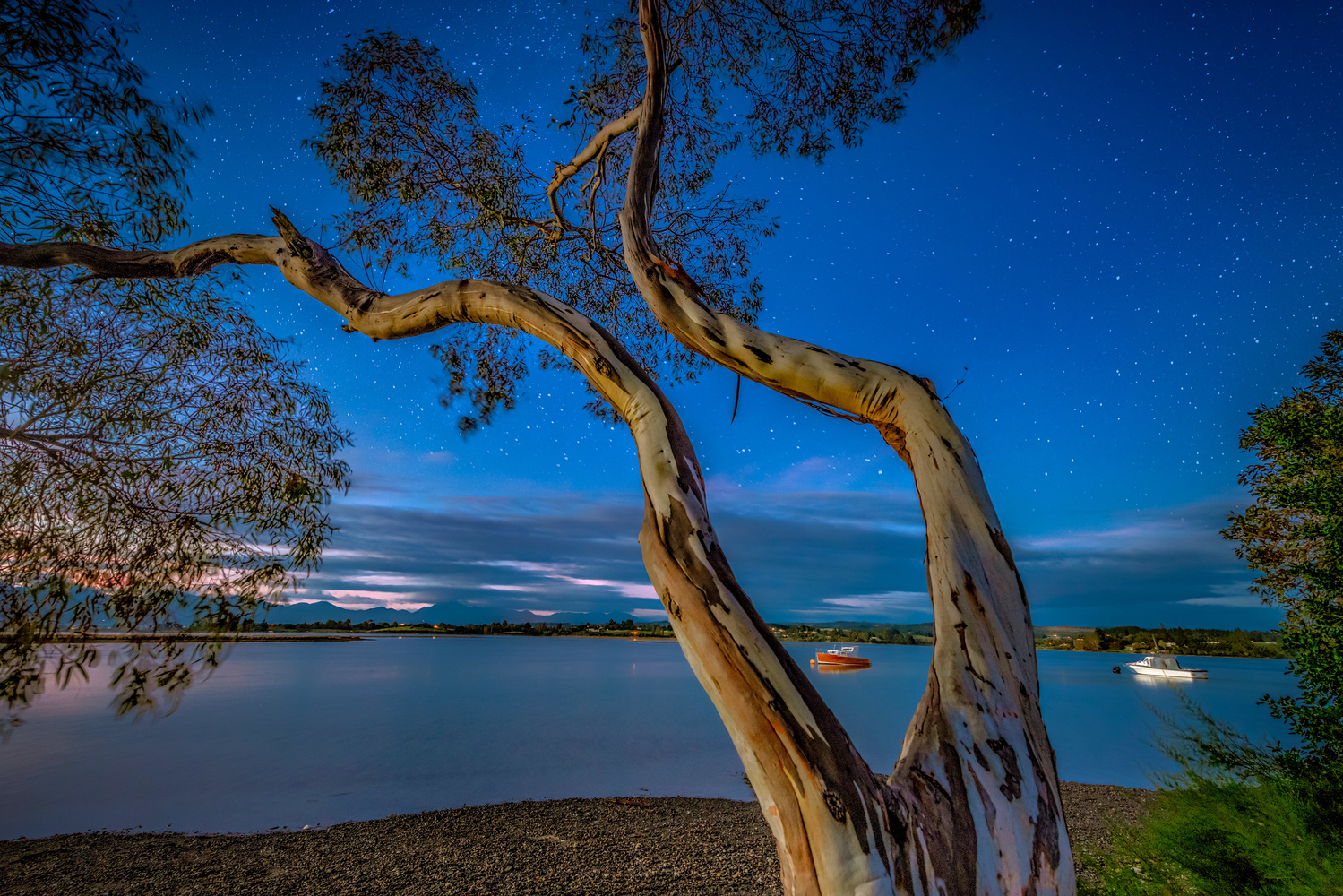 Branching Out by Alex Hill