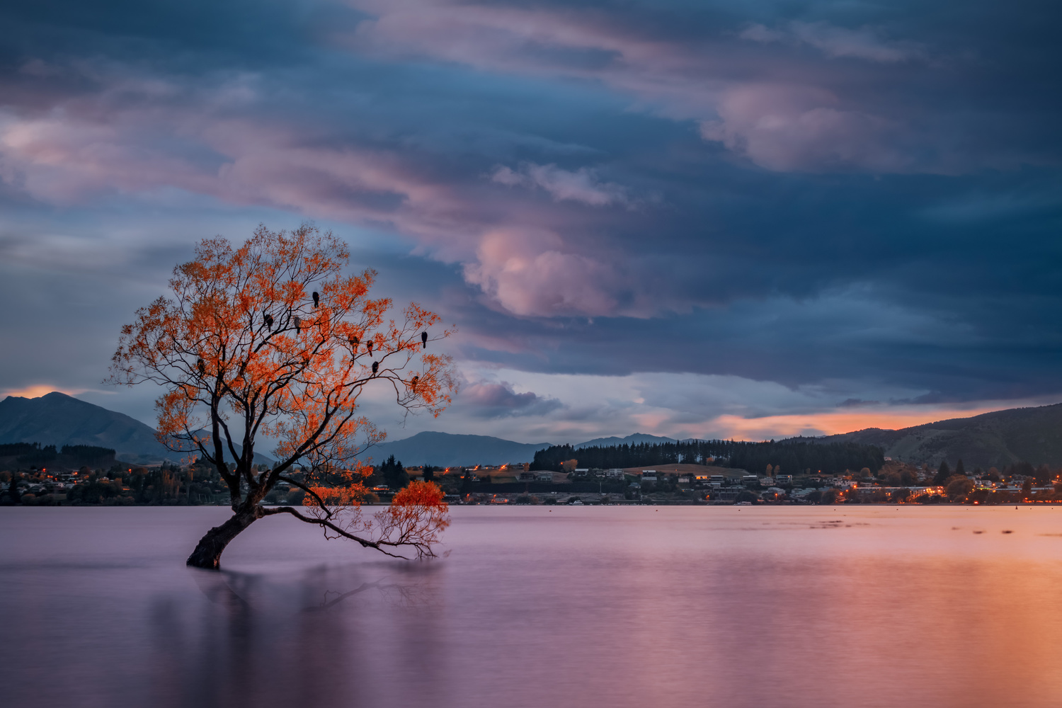 That Damn Wanaka Tree by Alex Hill