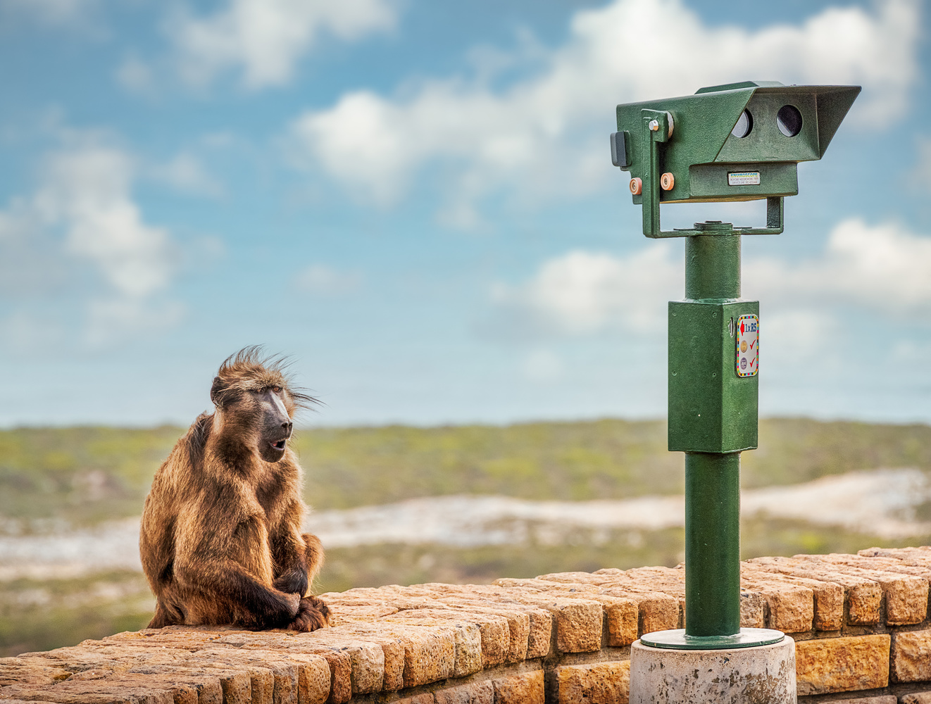To Much Monkey Business by Alex Hill