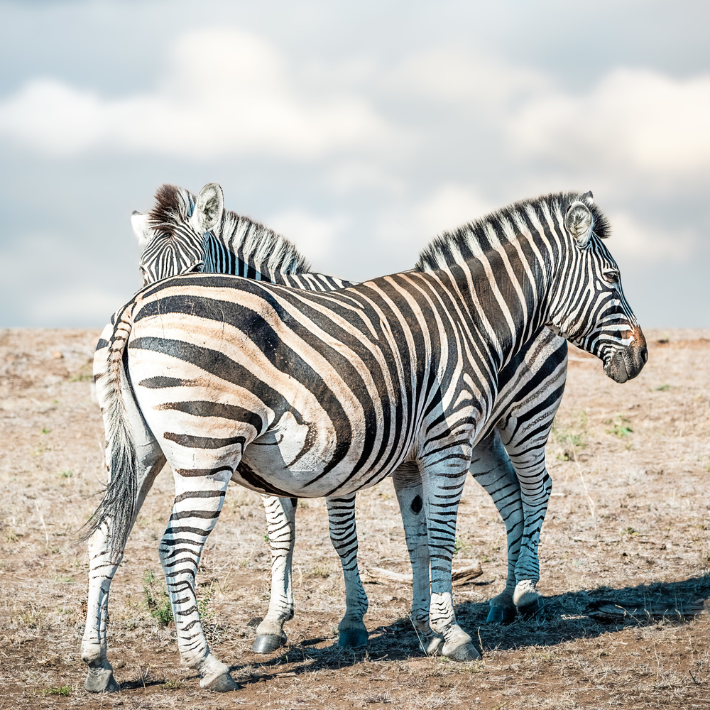 Different Stripes by Alex Hill