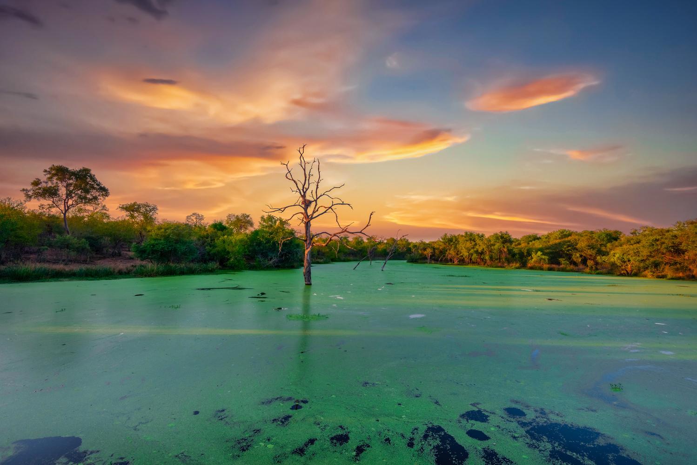 Lone Tree by Alex Hill