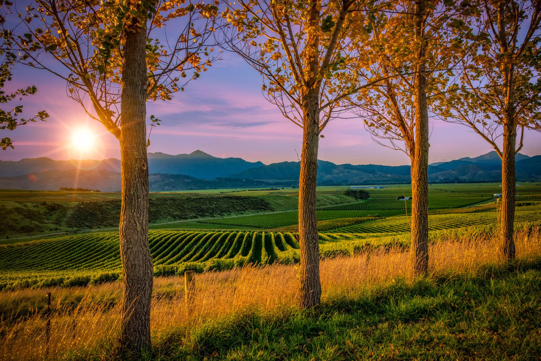 Sunset in Marlborough by Alex Hill