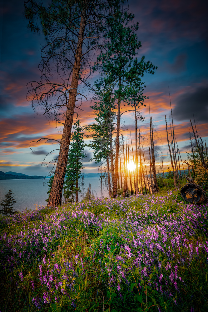 Okanagan Spring by Alex Hill