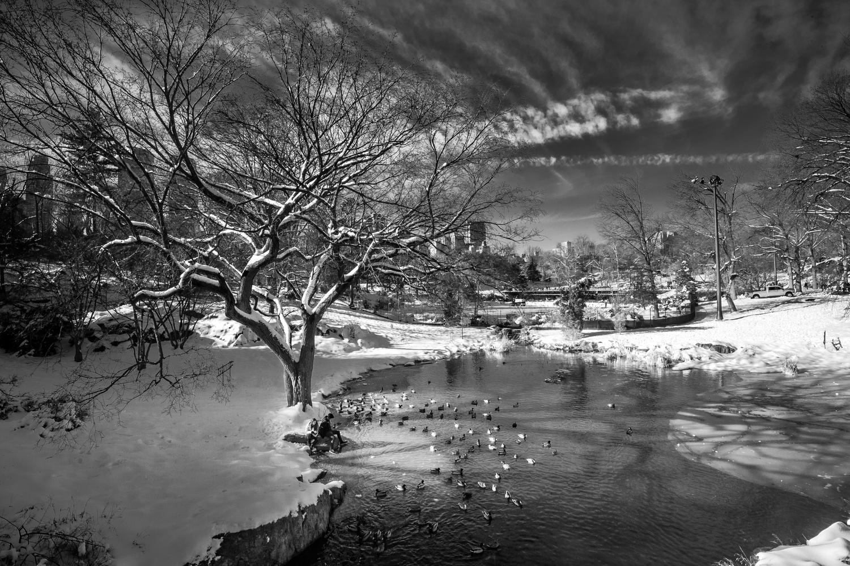 Duck Pond by Alex Hill