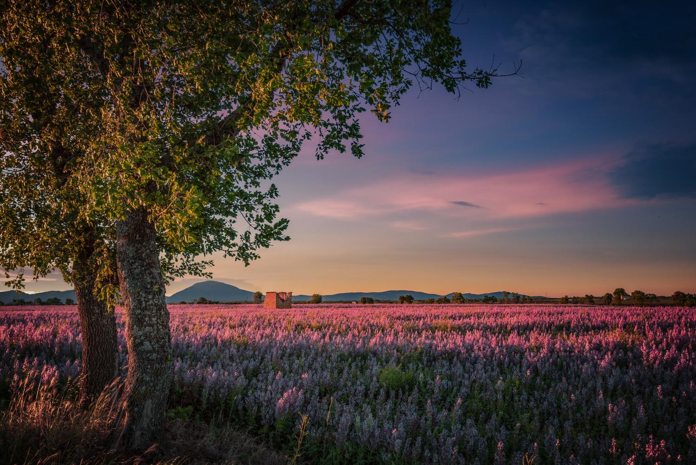 Provence Dawn by Alex Hill