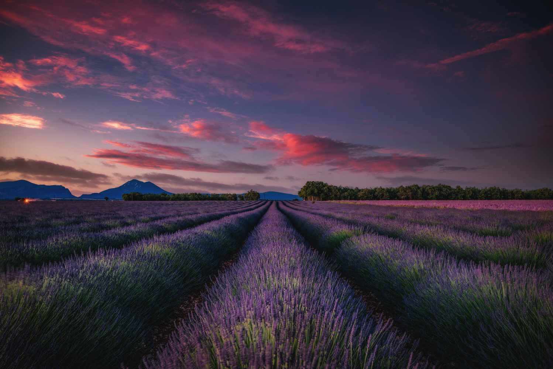Valensole Sunrise by Alex Hill
