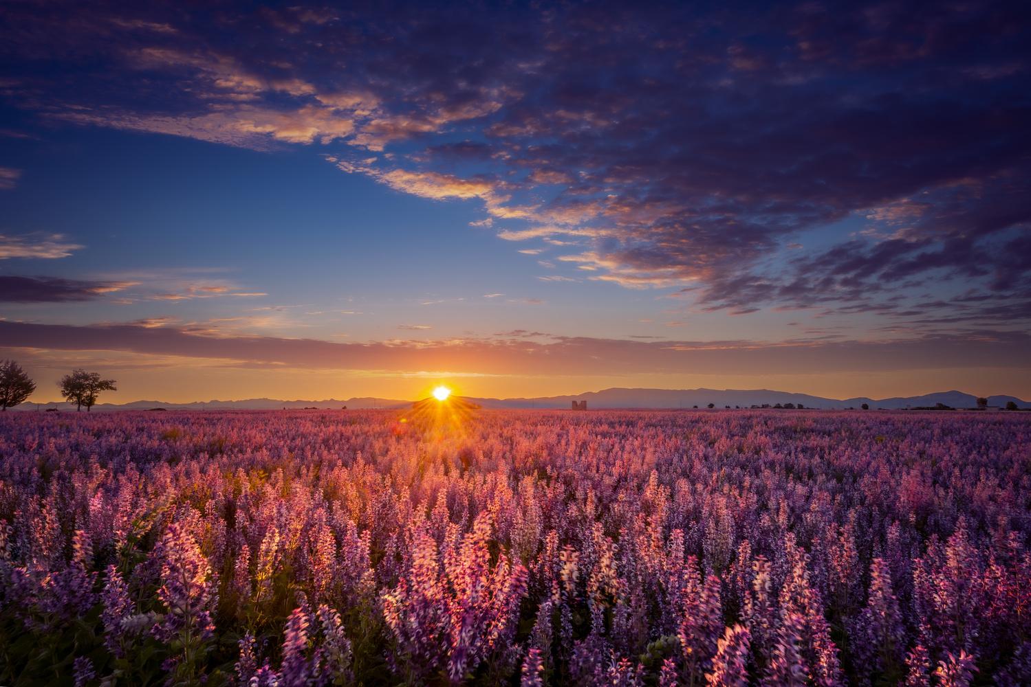 Morning Light by Alex Hill
