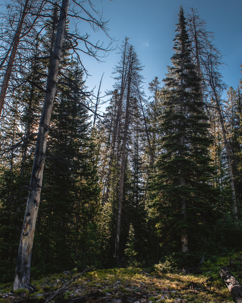 Edge of Timber by Nick Cody