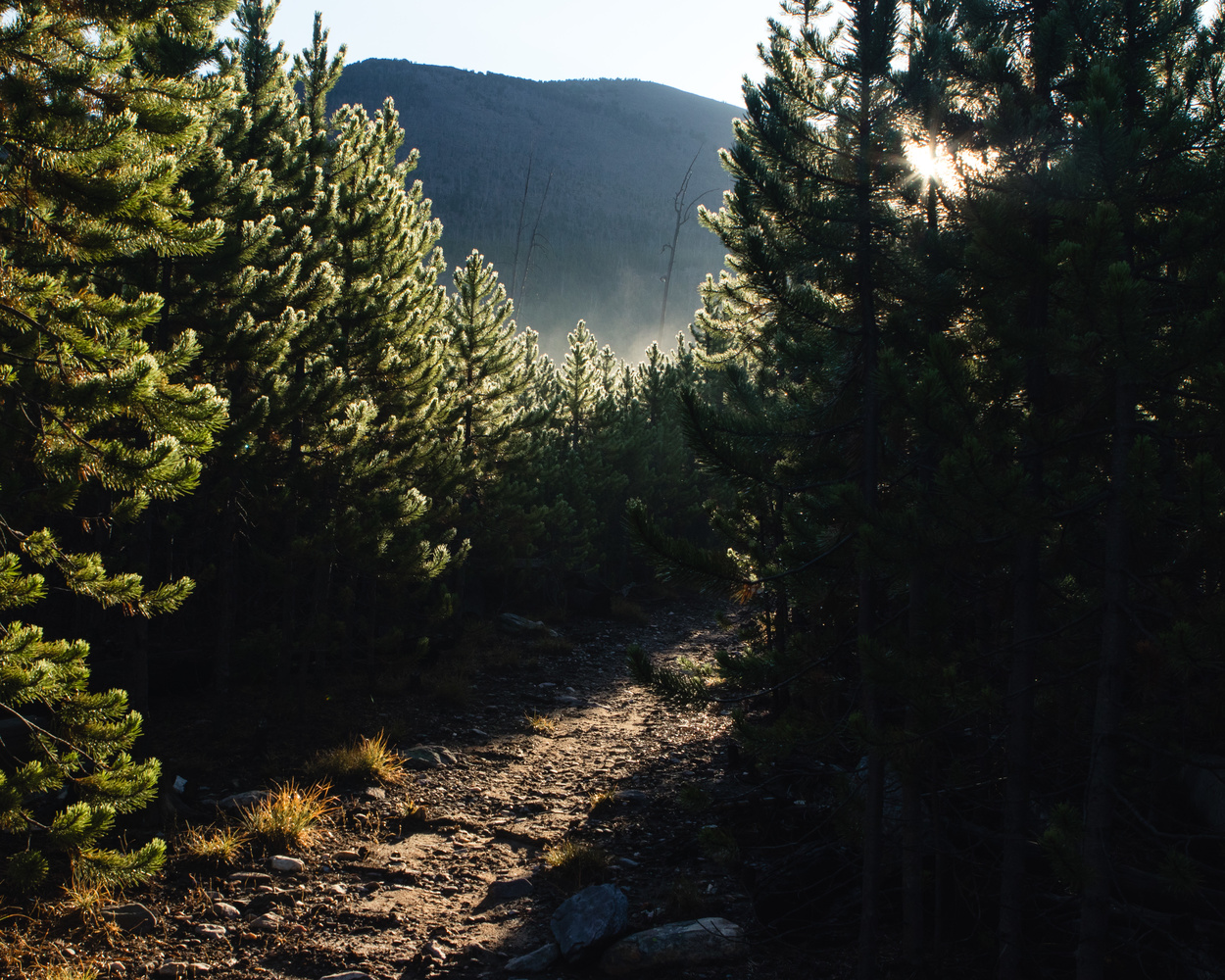 Sunrise on the Trail by Nick Cody