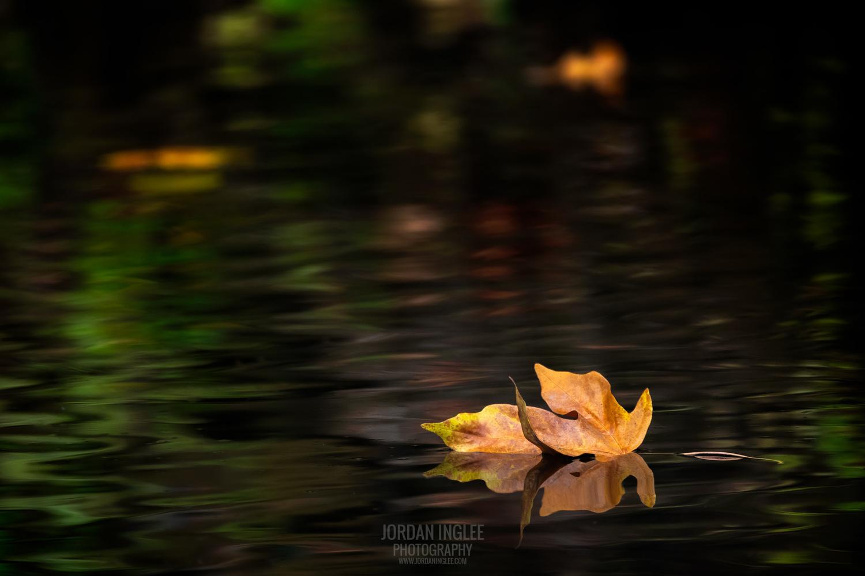 Autumn Reflection (Alt Version) by Jordan Inglee