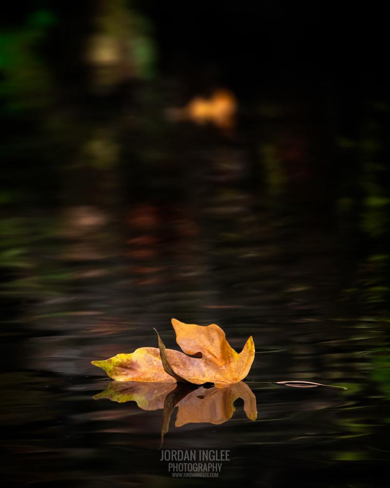 Autumn Reflection by Jordan Inglee