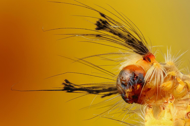 Caterpillar by Andrew Shapovalov