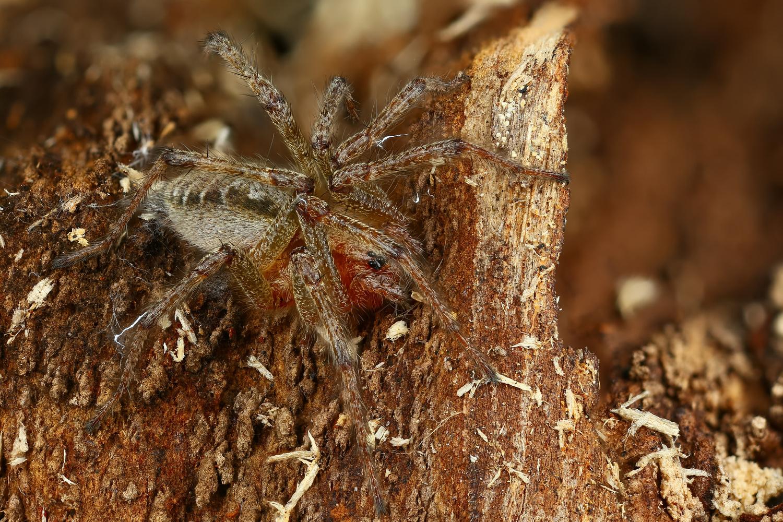 Spider by Andrew Shapovalov