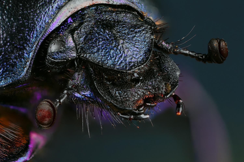 Purple head by Andrew Shapovalov