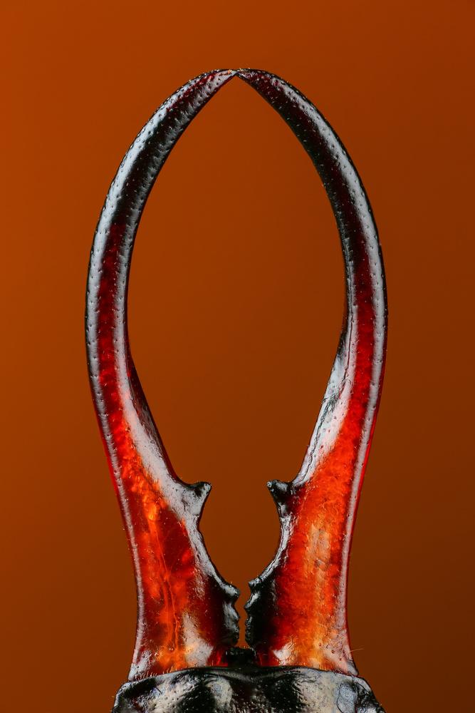 Tail by Andrew Shapovalov
