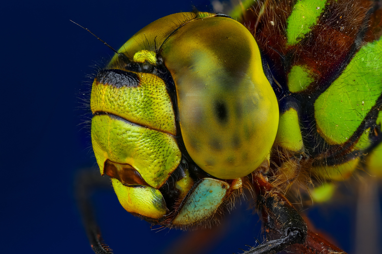 Dragonfly by Andrew Shapovalov
