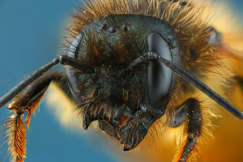 Bee by Andrew Shapovalov