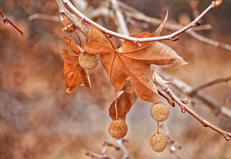 Autumnal by Gyorgy Szonyi