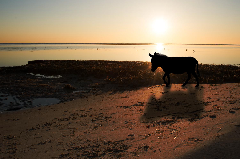 Wandering donkey by Carla Petrillo