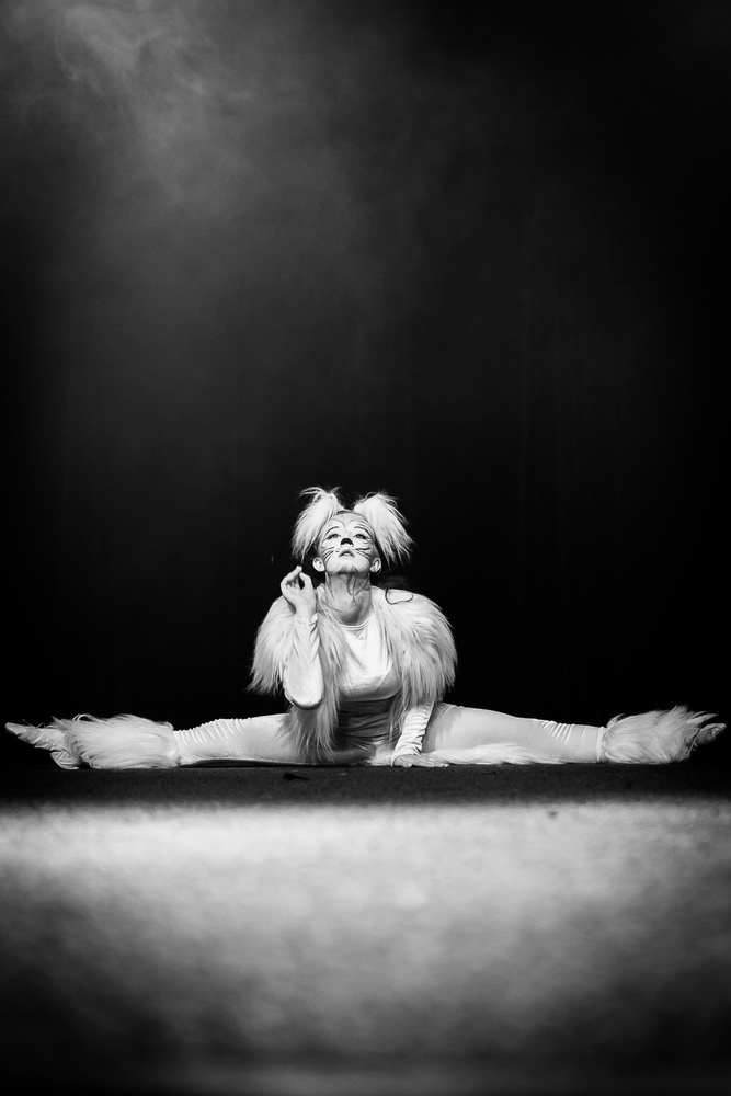 Like a Cat by Krzysztof Bober