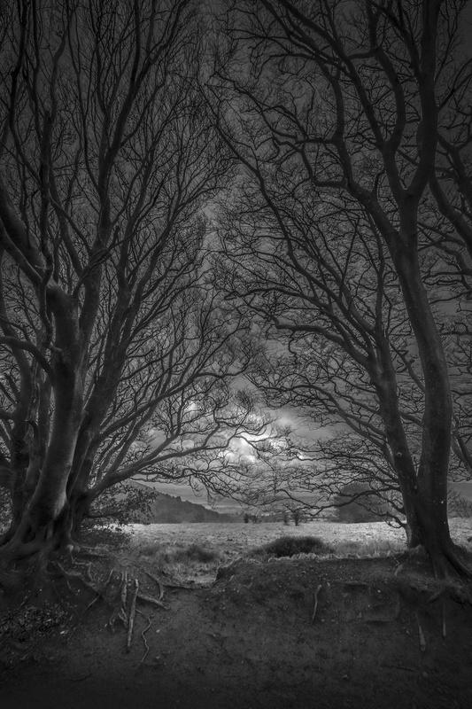 Framing by David Leyland