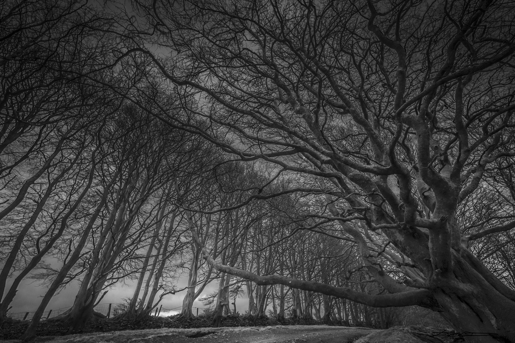 Quantock Trees by David Leyland