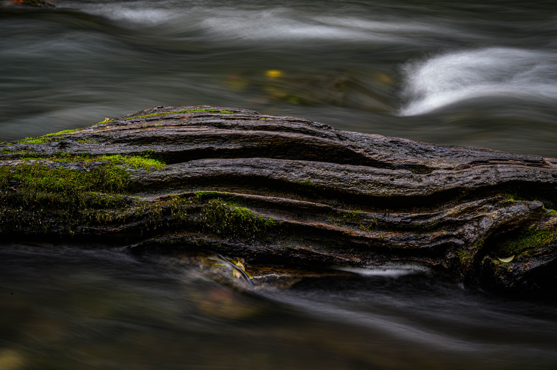 Fallen Log by Cody Bonner