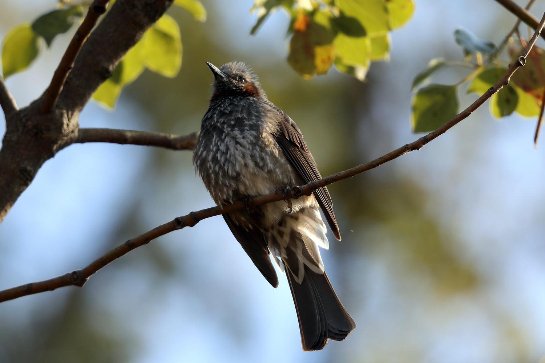 Bird in that tree by John L