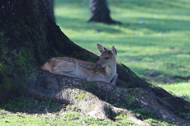 Baby deer by John L