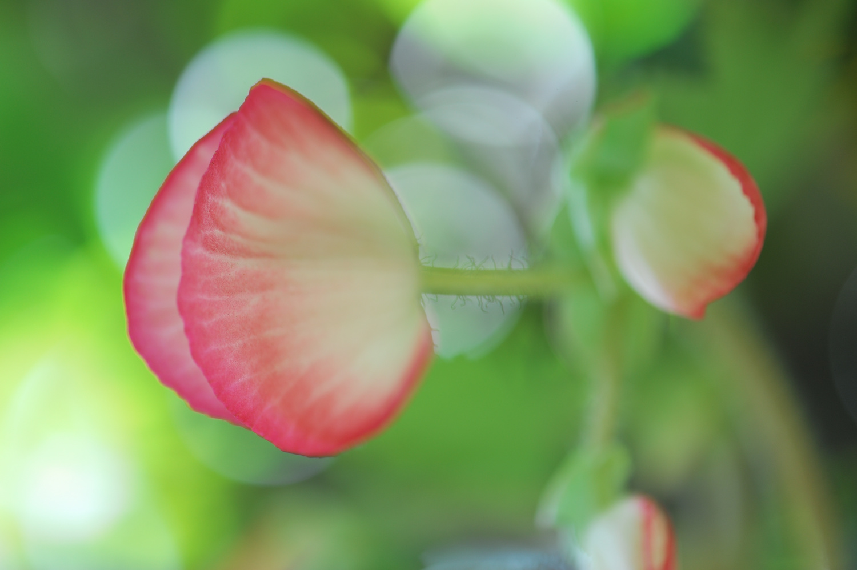 Flower by John L