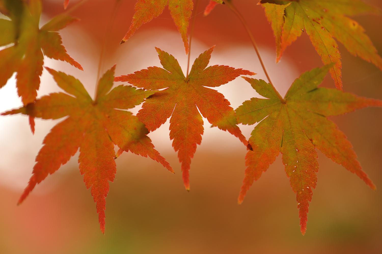 Autumn leaves by John L