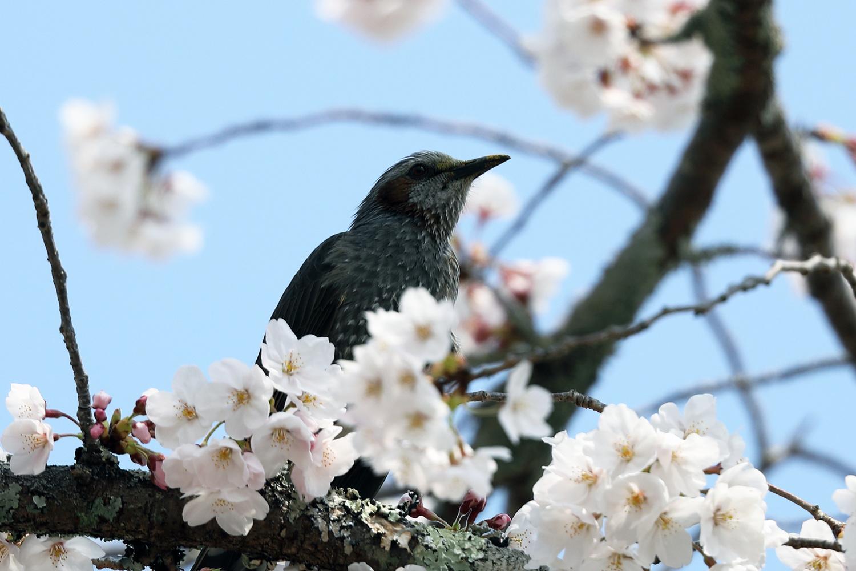 Full of Birdcalls by John L