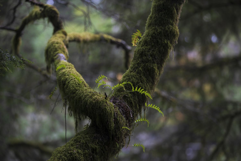 West coast rainforest wonders by Andreas Korfmann