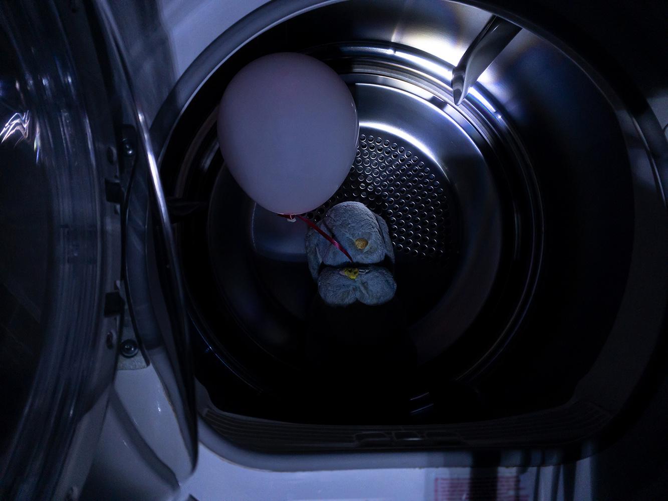 A hare inside a dryer machine by Yossi Schori