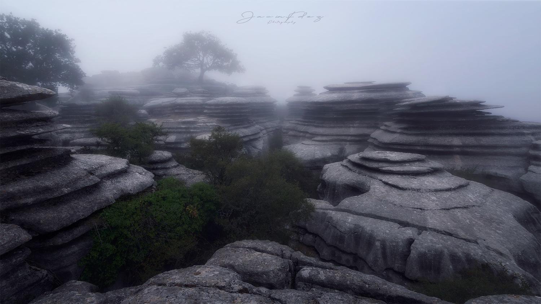 foggy day by Jacin Fernández