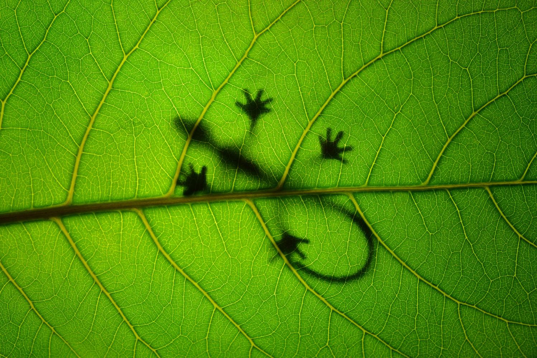 Sunbathing gecko on leafe by Leon Dafonte Fernandez