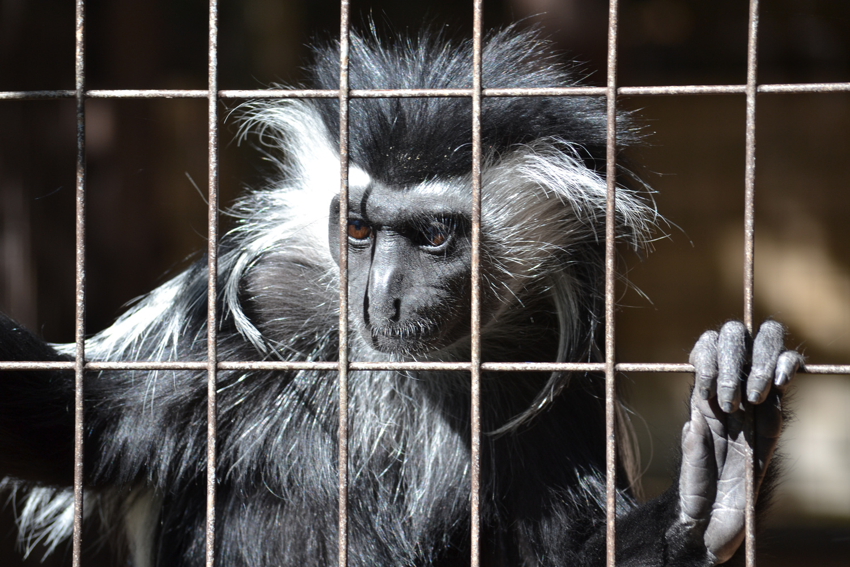 Monkey 1 by Greg Gero