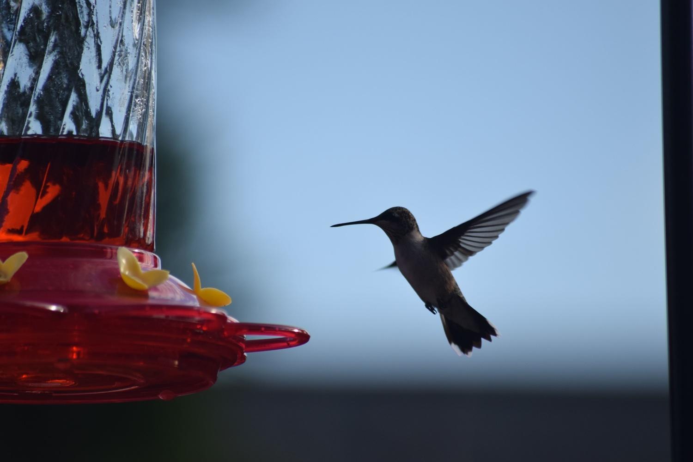 Hummingbird 1 by Greg Gero