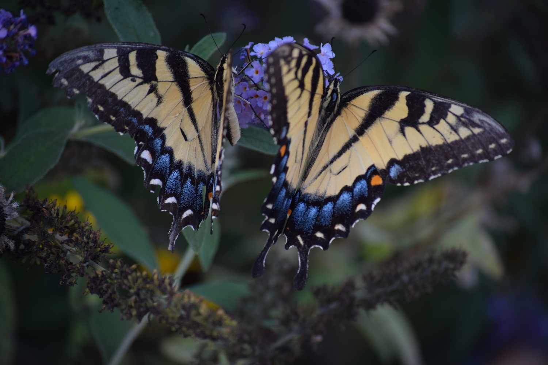 Butterflies 1 by Greg Gero