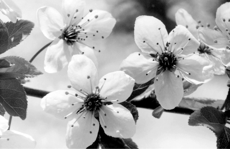 Flowers 1 by Greg Gero