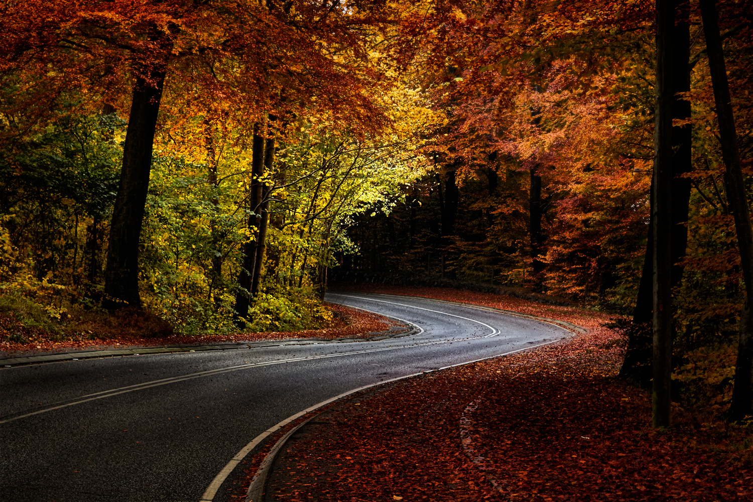 Autumn Road by Peter Strøiman